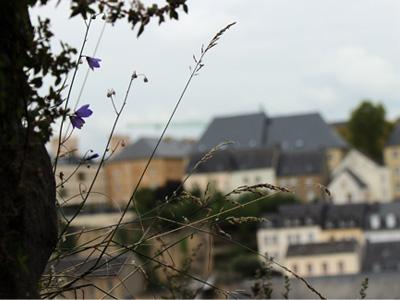Blick aus den Kasematten auf Luxemburgs Altstadt